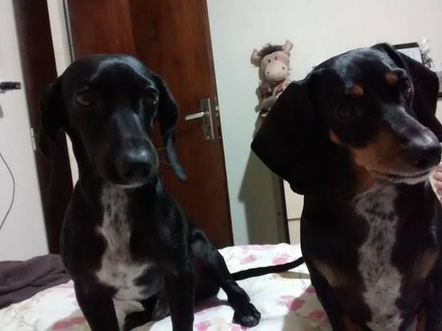 Miguel e Theodoro Cães fazem sucesso redes sociais Amigo Pet (Foto: Reprodução/ Facebook)