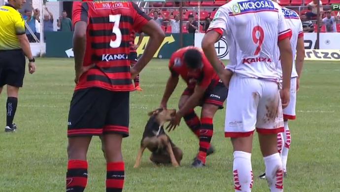 Cachorro invade campo em Itápolis em partida entre Oeste e Capivariano (Foto: Reprodução / SporTV)