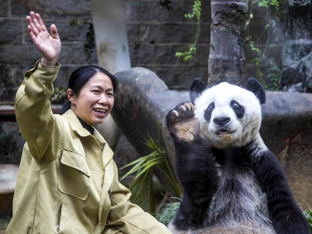 Panda gigante imita o gesto de sua tratadora e acena para visitantes que foram até o centro de pesquisas onde ele vive em Fuzhou, na China, para comemorar seu 35º aniversário (Foto: Reuters)