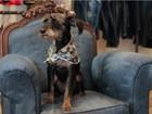 Cães terão evento com cerveja 'pet' e petiscos de graça em Florianópolis