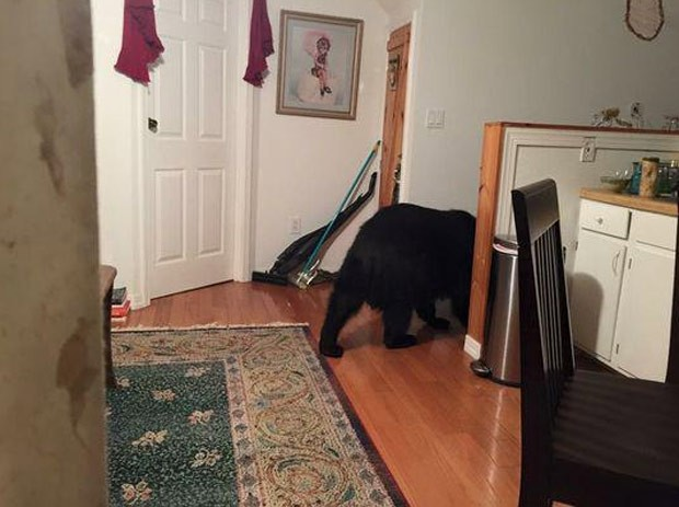 Americana encontrou um urso no apartamento de sua filha em Asheville (Foto: Asheville Fire Dept)