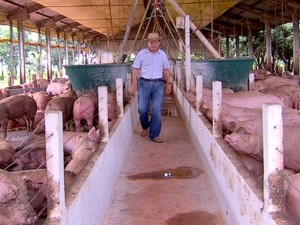 Alcindo Uggeri, produtor rural em Nova Mutum (MT) comemora a melhora de preços do quilo do suíno (Foto: Reprodução/TVCA)