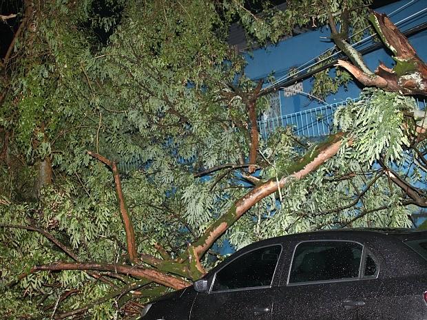 Árvores caíram e atingiram carros estacionados na rua (Foto: Aldenor Lima/VC no G1 )