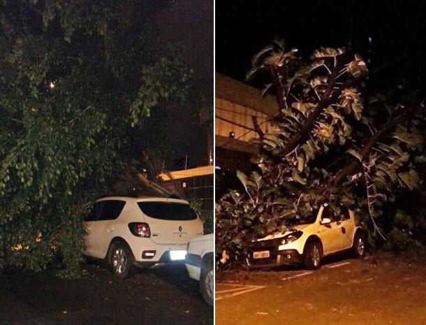No Cordeiro e no Espinheiro, árvores caíram em cima de veículos. Ninguém se feriu (Foto: Ricário Campos e Audemício Sobral / WhatsApp)