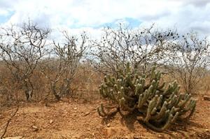 Caatinga (Foto: Reprodução/Colégio Qi)