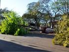 Prefeitura corta 26 árvores em praça no centro de Pitangueiras, SP