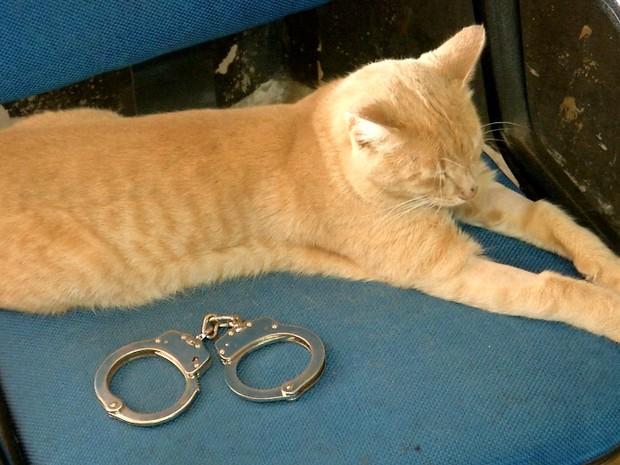 Gato castração projeto (Foto: Reprodução/ TV Morena)