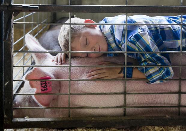 Menino faz 'despedida carinhosa' após porco ser vendido em feira