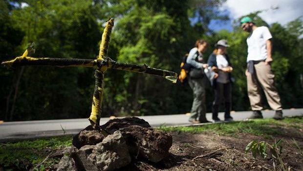 Cruz deixada por pesquisadores em local onde harpia foi encontrada morta na BR-101  (Foto: Joao Marcos Rosa/BBC)
