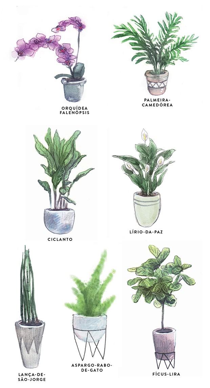 Plantas de áreas internas (Foto: Ilustração Mary Cagnin)
