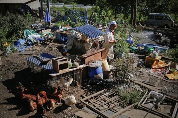 Sakamoto em sua propriedade onde cuida de 500 animais (Foto: Damir Sagolj/Reuters)