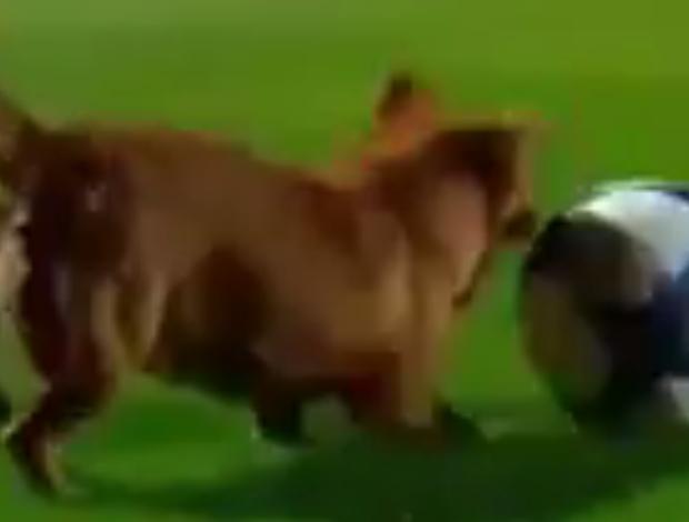 BLOG: Cadela invade campo, brinca com a bola, e San Lorenzo faz gol em seguida