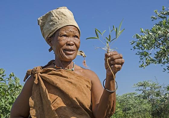 Qwaxo, uma anciã Naro, mostra a raiz de uma planta medicinal usada para a preparação de um colírio  (Foto: © Haroldo Castro/ÉPOCA)