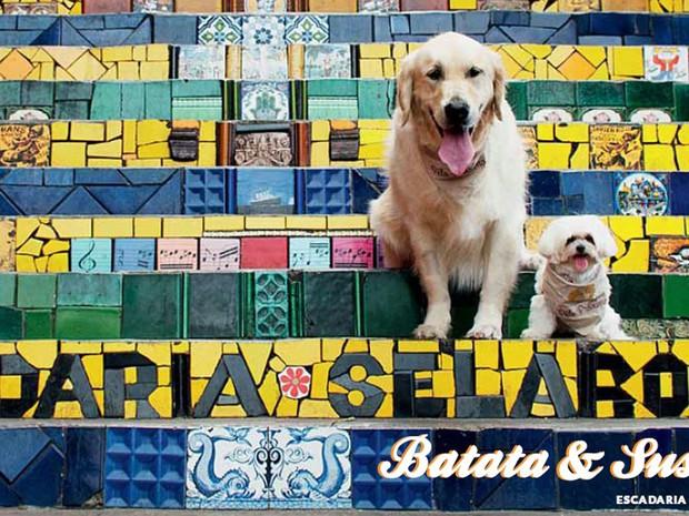 Projeto filantrópico faz  fotos de cachorros em pontos do Rio (Foto: Projeto Pêlo Próximo/ Divulgação)
