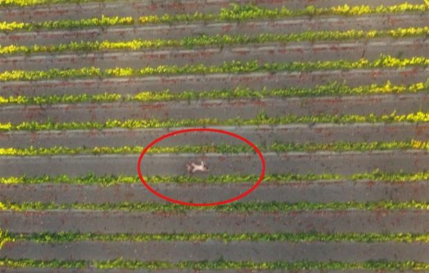 Cineastas filmaram filme pornô conceitual com drone (Foto: Reprodução/Vimeo/GHOST+COW FILMS)