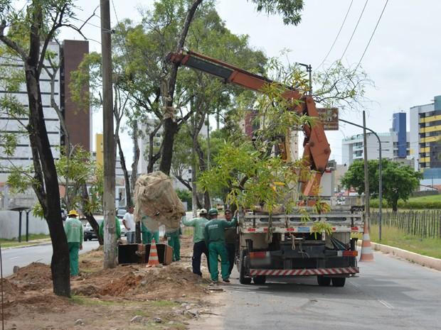Um total de 32 árvores foram retiradas e 11 transplantadas (Foto: Walter Paparazzo/G1)