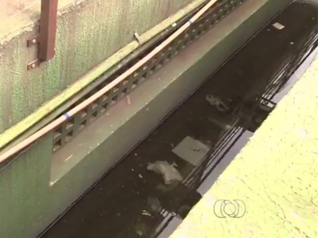 Focos do mosquito foram encotrados em água acumulada no subsolo de pizzaria, em Goiânia, Goiás (Foto: Reprodução/ TV Anhanguera)