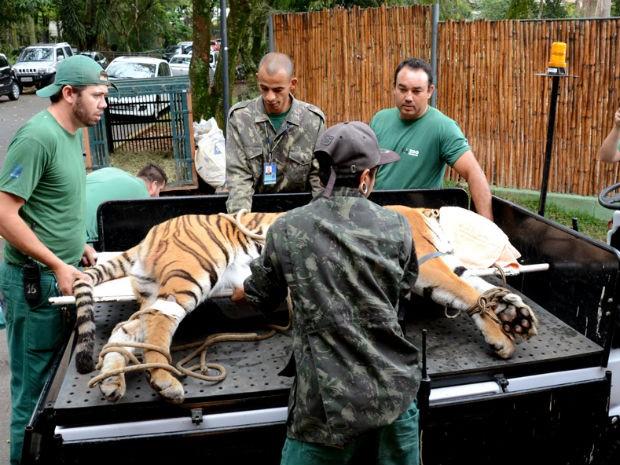 Animal chegou ao zoológico em 2014 (Foto: Zaqueu Proença)