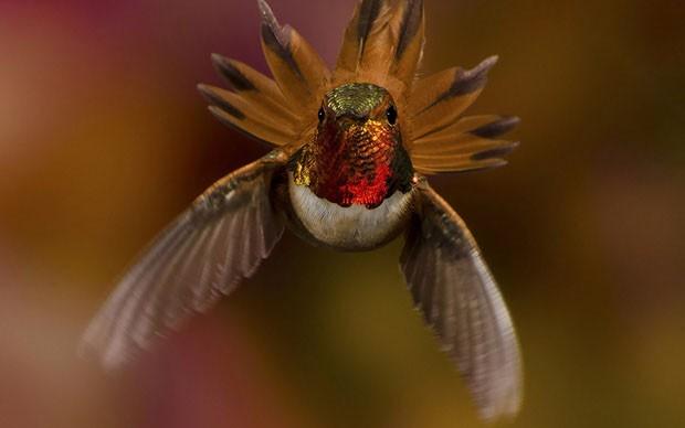 20 beija-flores (Foto: Scott Bechtel / reprodução)