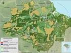 Pelo 3º mês consecutivo, MT é líder de desmatamento da Amazônia Legal