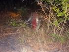 Idosa morre e três ficam feridos em capotamento na BR-135, oeste da BA