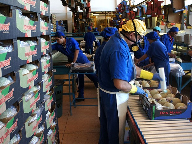 Melão produzido na Agrícola Famosa é um dos produtos potiguares líderes de exportação (Foto: Anderson Barbosa/G1)