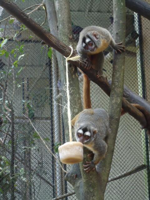 Animais recebem frutas congeladas para refrescar (Foto: Rafael Pagani/Zoo Pomerode)