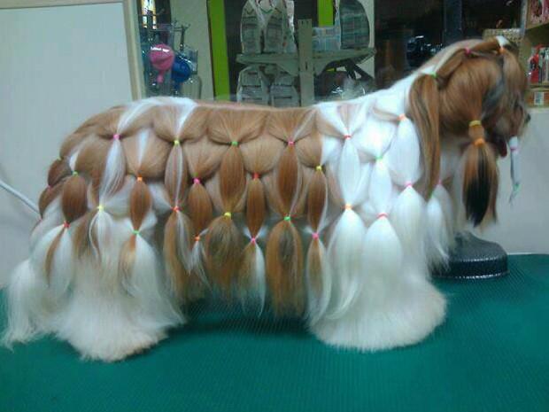 Cães ganham até penteados (Foto: Joel Alves Cardoso/Arquivo Pessoal)