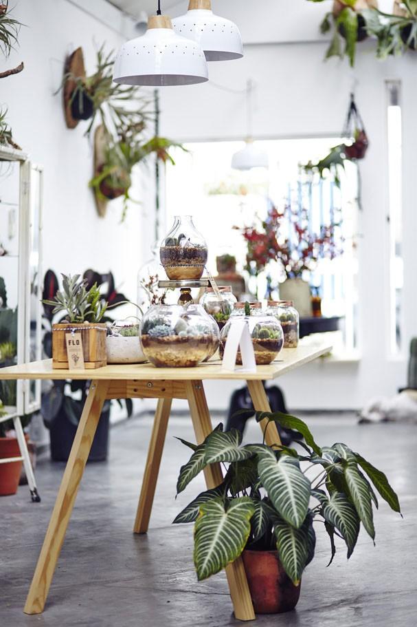 Para amantes de plantas e muito mais