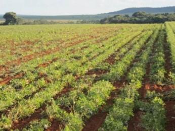Plantação de soja no DF (Foto: Agência Brasília/Divulgação)