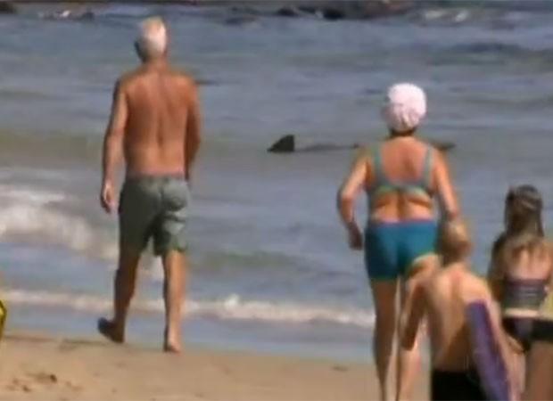 Dupla de turistas conseguiu fazer com que o animal voltasse a mar aberto (Foto: Reprodução)
