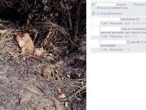 Em consequência das queimadas, muitos animais acabam morrendo no local (Fot Adailton Paulino/Arquivo pessoal)
