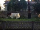 Cavalo é flagrado 'agasalhado' em manhã mais fria do ano no Paraná