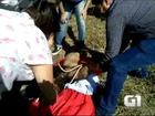 Tamanduá-bandeira ferido é resgatado em rodovia de Porangaba