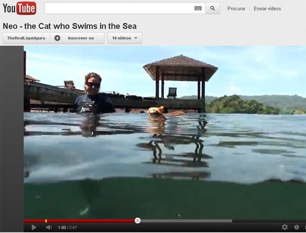 Neo, o 'gato nadador', em seu banho de mar (Foto: Reprodução)