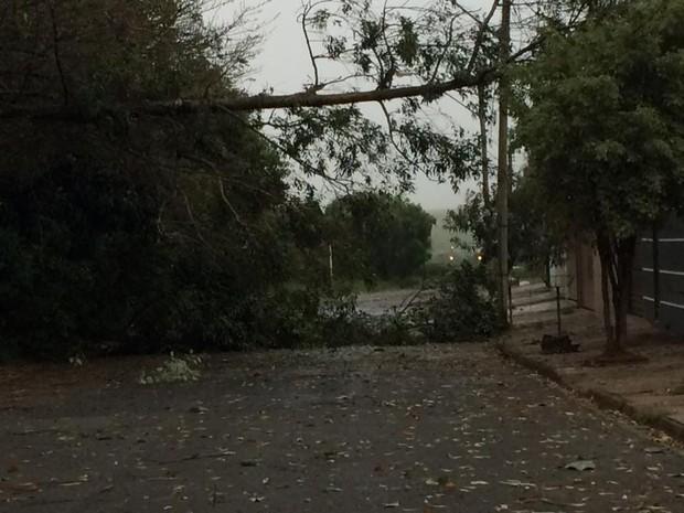 Árvores caíram na cidade (Foto: Pedrinho Gobbo/Acontece Botucatu)
