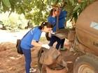 Oito cidades da região registram mortes de macacos por febre amarela
