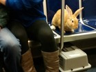 Coelho viaja em banco de trem nos EUA e dona é advertida