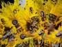 Fotos, vídeos e GIFs resumem a 1ª noite de desfiles em SP (Marcelo Brandt/G1)