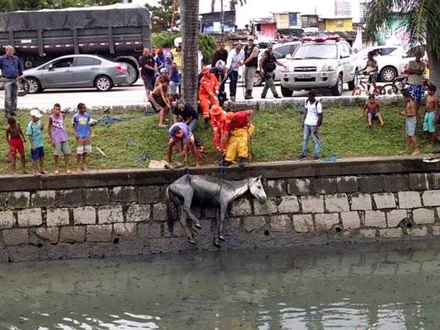 Cavalo é resgatado com ajuda de dono. (Foto: Sérgio Lira/TV Globo)