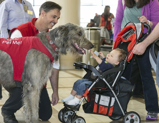 Cão distrai passageiros no Aeroporto Internacional de Los Angeles (Foto: Damian Dovarganes/AP Photo)