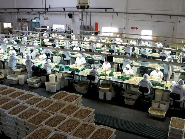Fábrica da Usibras, em Mossoró, é maior exportadora de castanha de caju do país (Foto: Anderson Barbosa/G1)