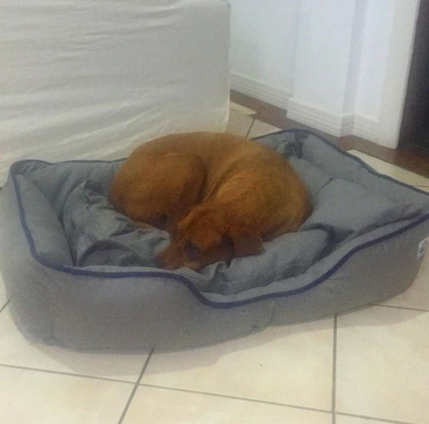 Akil, cachorro de Marcos Paulo (Foto: Instagram / Reprodução)