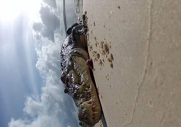 Réptil mordeu a câmera e depois retornou para a água. (Foto: Reprodução)