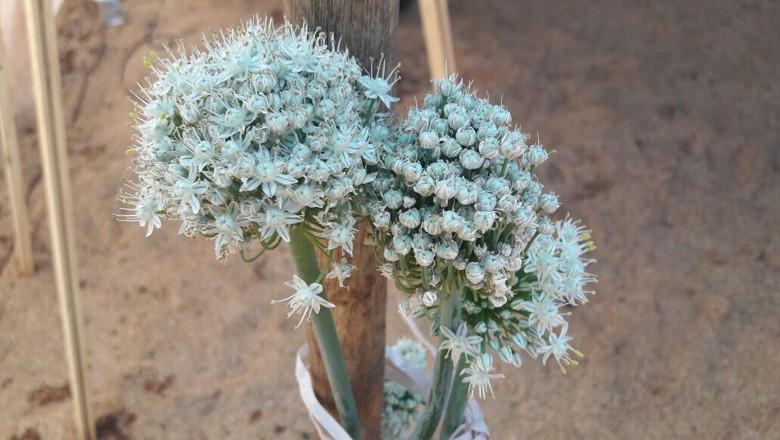 hortalicas-uberlandia-mg (Foto: Raphael Salomão)