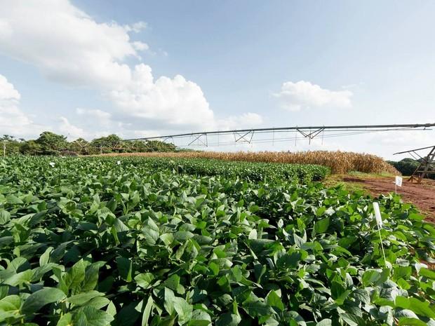 Campo experimental da Esalq em Piracicaba fará parte de polo tecnológico ( (Foto: Gerhard Waller/Esalq)