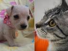 Evento oferece cerca de 70 cães e gatos para adoção, em Goiânia
