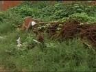 Lotes abandonados e com lixo preocupam moradores de Araguaína