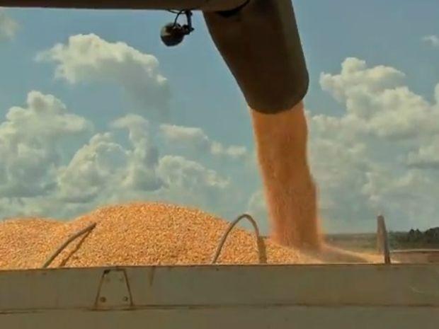 Produção maior de milho elevou VBP de Mato Grosso (Foto: Reprodução/TVCA)