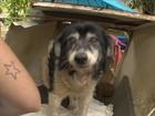 30 cães ficam abandonados em casa de Florianópolis após morte de dona